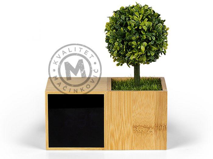 evergreen-bez